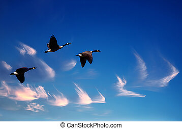Beautiful sky with flying birds natural background - Birds...