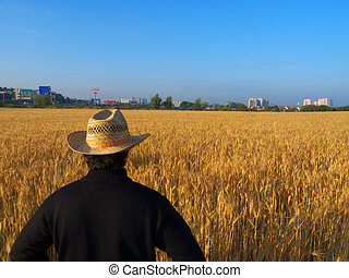 Farmer overlooking his wheat field - A farmer overlooking...