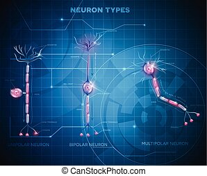 Neuron types, nerve cells that is the main part of the...