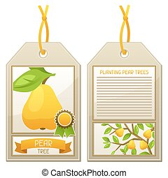 Sale tag of seedlings pear trees Instructions for planting...