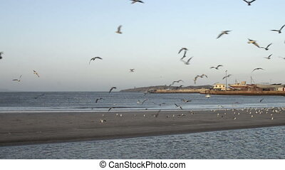 Ocean beach in morning sun with flying seagulls - Ocean...