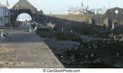 Essaouira fisherman harbor filled with seagulls