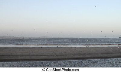 Ocean beach in morning sun with fly - Ocean beach of...