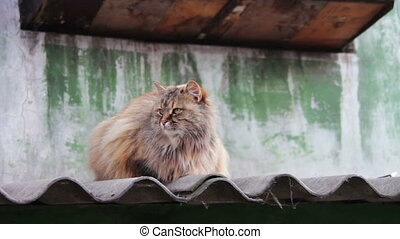Homeless Cat on the Roof Outside - Homeless, Srtay colored...