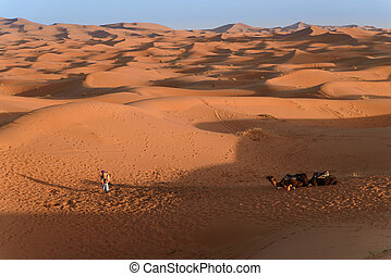 Camels at the dunes, Morocco, Sahara Desert