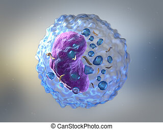 Lymphocytes - Lymphocytes are white blood cells or...