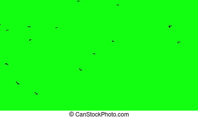 birds flock green screen - birds flock on green screen