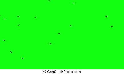 birds flock green screen - birds flock on green screen