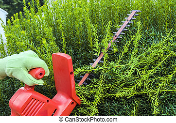 Trimming Bushes - Person Using Electric Clippers to Trim...