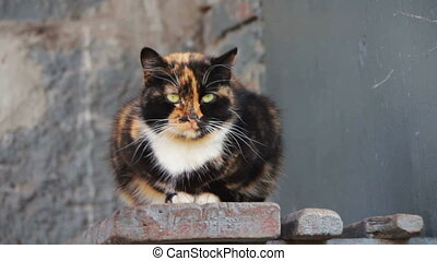 Homeless Cat on the Street - Homeless, Srtay colored cat...