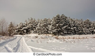 Winter forest landscape panorama