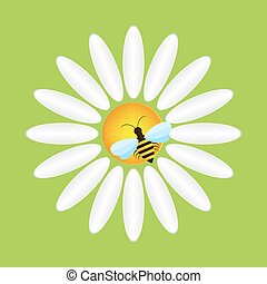 Camomile and bee