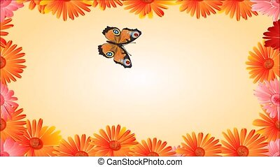 Video Butterfly inachis io - Video Animation of illustration...