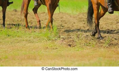 Several Horses Moving On Green Meadow - Waist down shot of...
