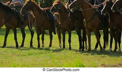 Brown Horses With Riders Standing In Line - In the frame...