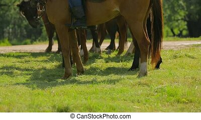 Brown Horses Standing In Line On Green Meadow