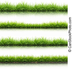 fresh spring green grass isolated