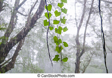plant in tropical rain forest