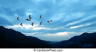 Birds flying against blue evening sunset environment or...
