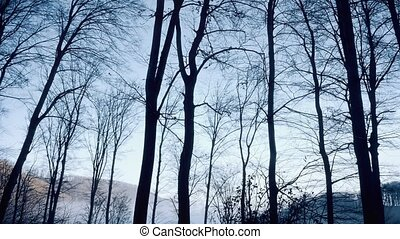 Driving through the forest, bare trees in winter afternoon