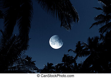 Moon Light - A background with a full moon on a dark night...