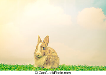 Rabbit on green grass for easter holiday ( Filtered image...