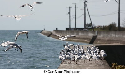 flock of seagulls on the concrete breakwater