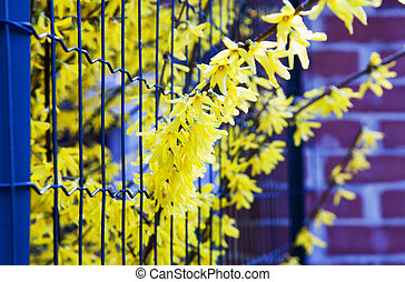 Yellow flowers between fence