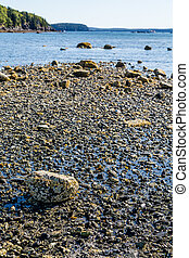 Rocks in Tidal Pool at Low Tide - Low Tide with tidal pools...