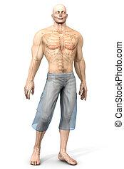 humano, anatomía, visualización, -, interno,...