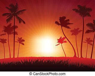 tropisk, solnedgång, bakgrund