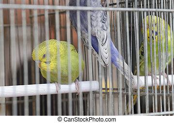 parokeet, em, Um, cage, ,
