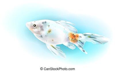 Goldfish in the sea.  Aquarium fish. Realistic  illustration.