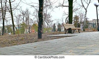 bench nature autumn park path landscape pavement - bench...
