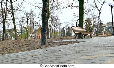 bench nature autumn park landscape path pavement - bench...