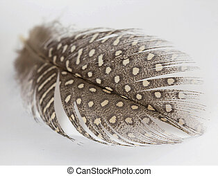 feathers with white spots
