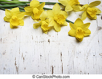 Narcissus - Beautiful fresh narcissus on white wooden table
