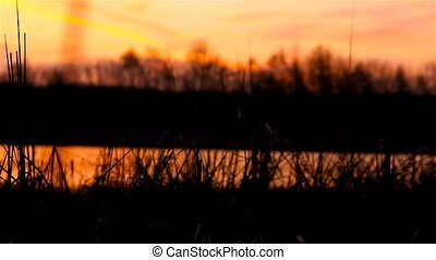 river bulrush grass at landscape sunset orange nature -...