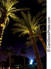 Palm trees at night in Eilat, Israel