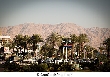 Palm trees in Eilat, sunny Israel
