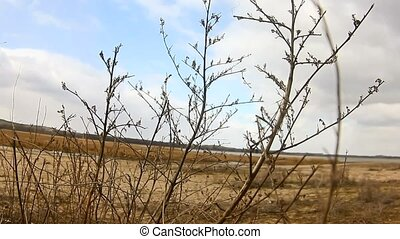 branch dry grass on background of blue sky sand - branch dry...