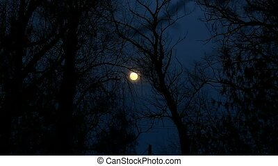 night moon trees beautiful landscape silhouettes of branches...