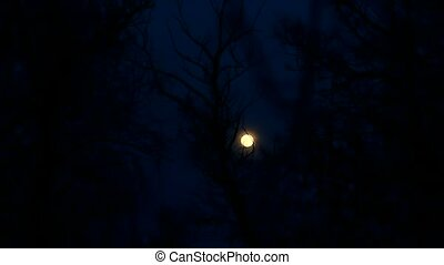 moon night trees beautiful landscape silhouettes of branches...