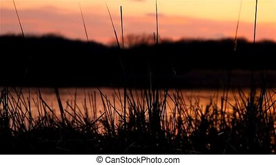 river bulrush landscape grass at sunset orange nature -...