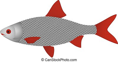 fish in vector on white background