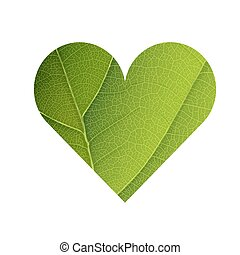 Green Leaf Veins Texture Heart Shaped. Earth Day Concept Design. Isolated template