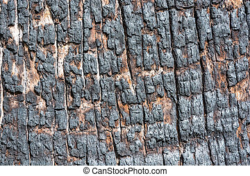 The charred texture of the tree trunk - Bright and...