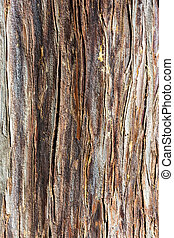 The texture of the tree trunk - Bright and interesting...