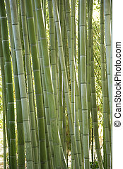 Green bamboo canes