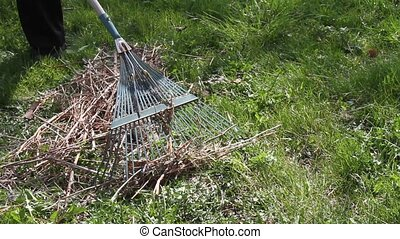 Raking Grass Lawn - Raking dead grass from a spring lawn